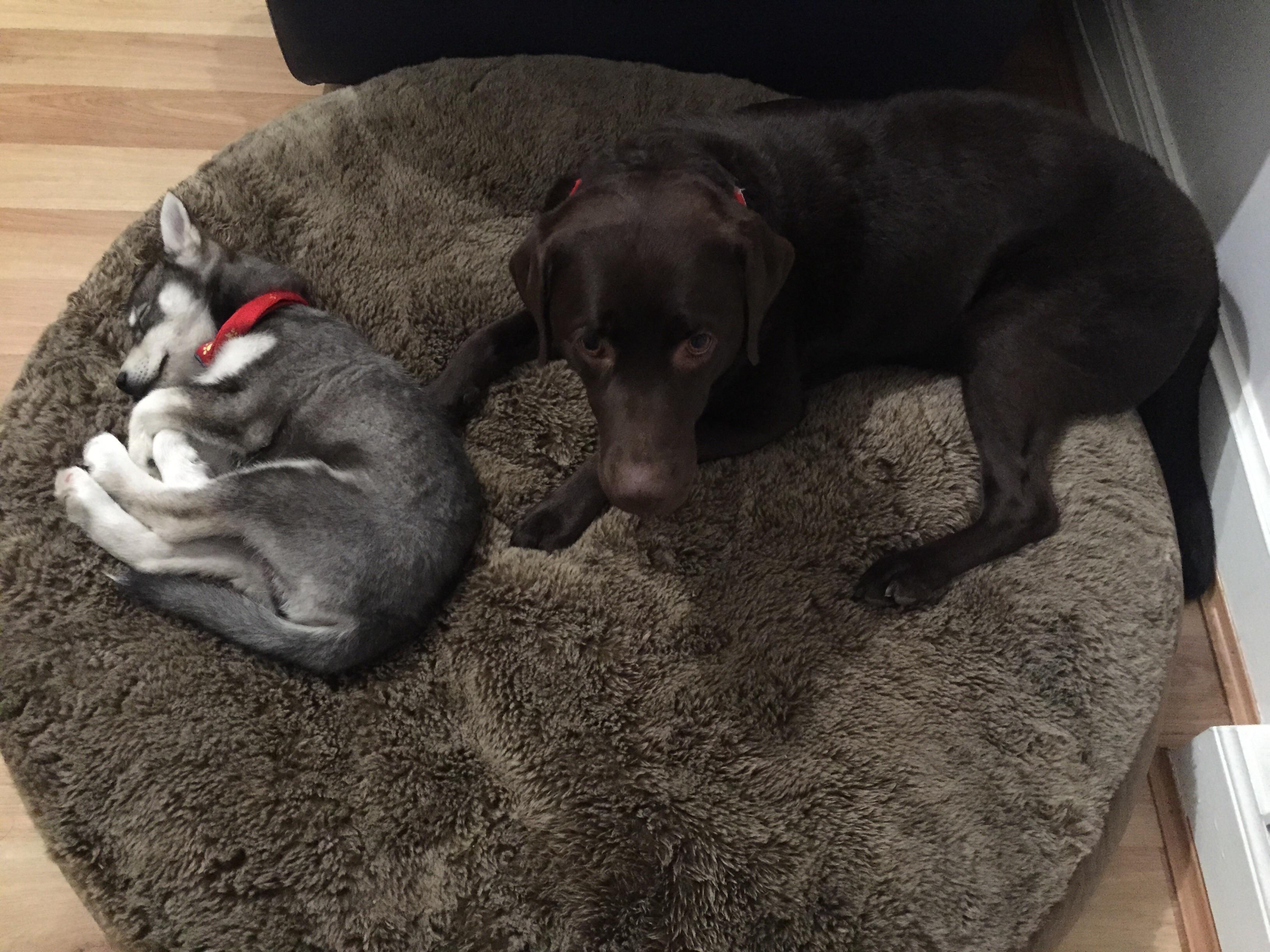 Dog Training Kilsyth