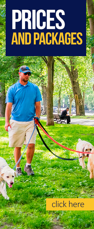 Dog Walking Business How To Start A Dog Walking Or Pet Sitting