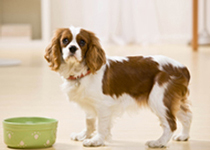 Pet sitting and dog walking website