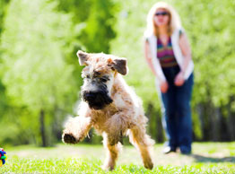 how to become a pet sitter uk