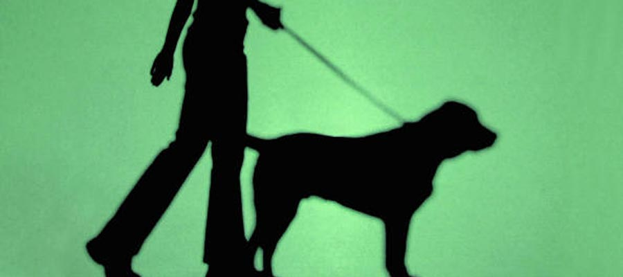 How To Start A Dog Walking Business Uk