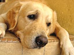 Stresses and strains suffered by dogs when they are left alone all day